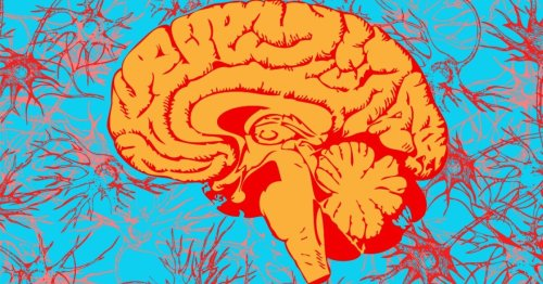Insights into how a mammalian brain naturally produces psychedelic DMT