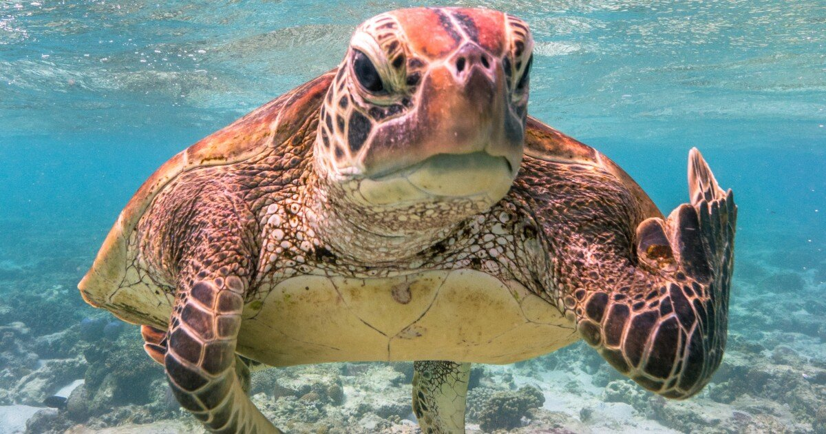 Nature has appointed a spokesturtle: The Comedy Wildlife Photo Awards