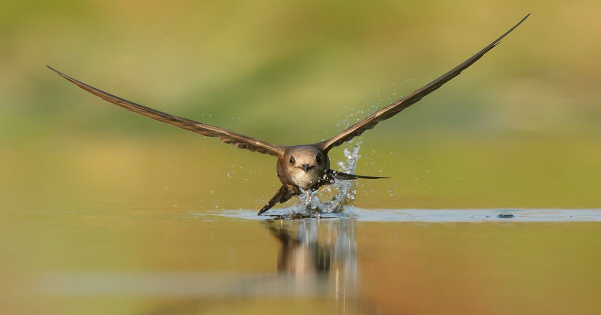 The top-flight winners of the 2020 Bird Photographer of the Year