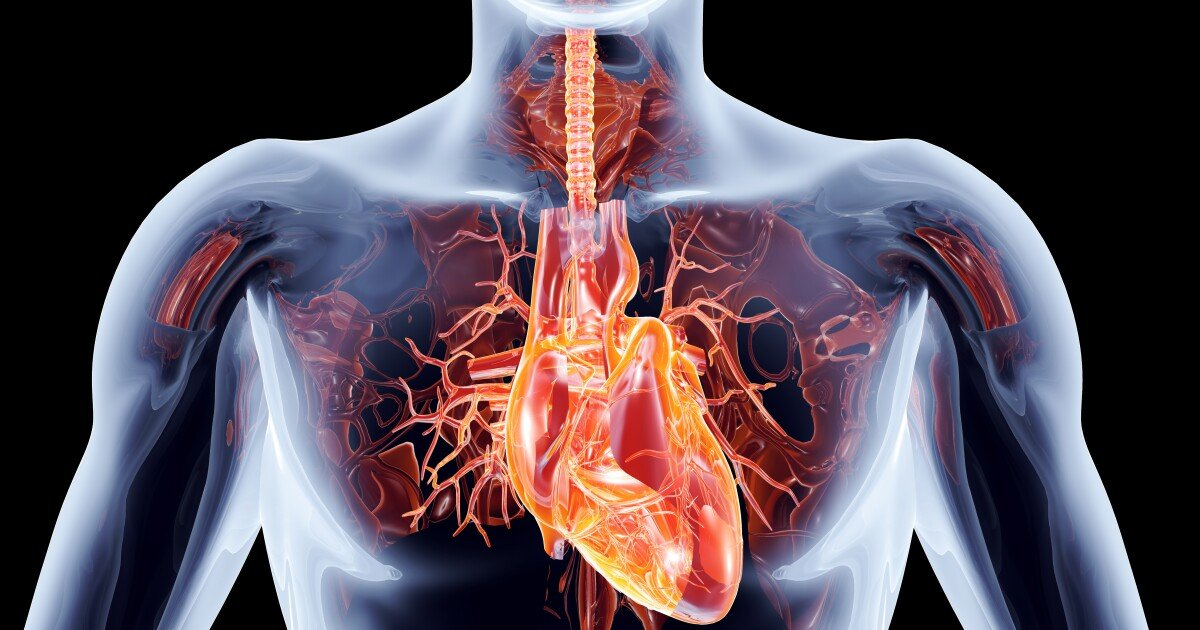 Lab-grown heart cells implanted into human patient for the first time
