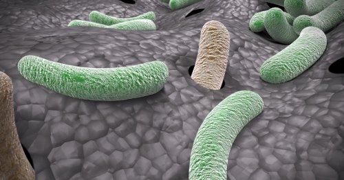 Arthritis drug reinforces our last line of defense against superbugs