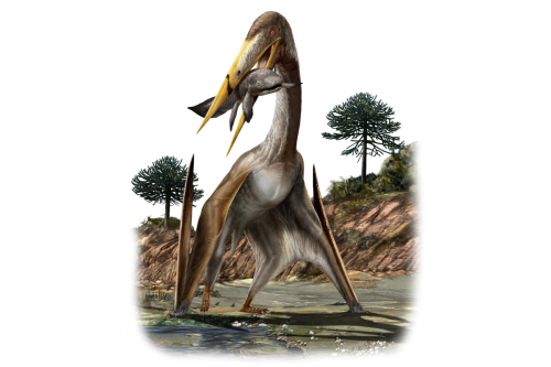 Bizarre bones helped giant pterosaurs straighten up and fly light