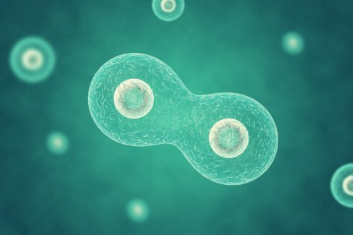 Synthetic organism undergoes cell division in breakthrough study
