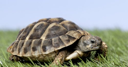 Concept system puts cyborg turtles under mind control