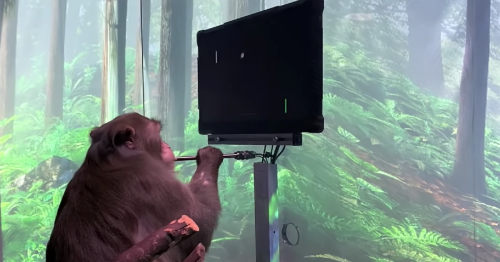 Elon Musk's Neuralink has a monkey play Pong with its mind