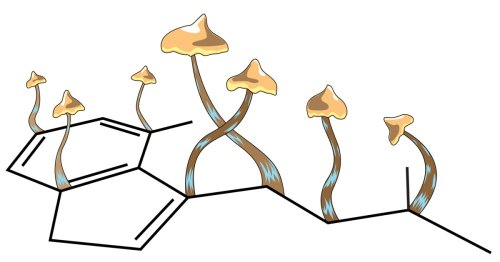 Landmark study shows one dose of psilocybin induces new neural connections