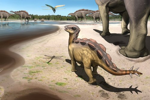 """Fossil footprint from """"cat-sized"""" baby stegosaur surprises scientists"""