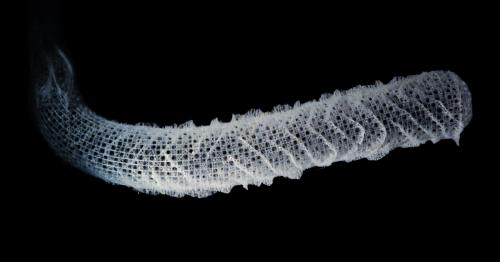 Sea sponge skeletons inspire stronger, lighter load-bearing structures
