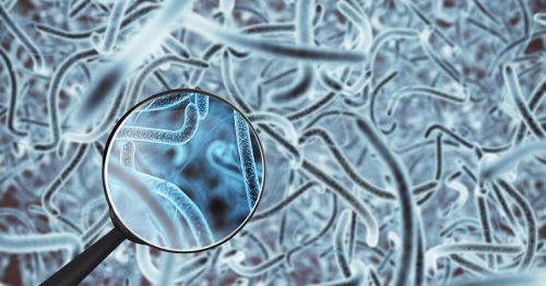 Certain gut bacteria found to reduce cancer drug side effects