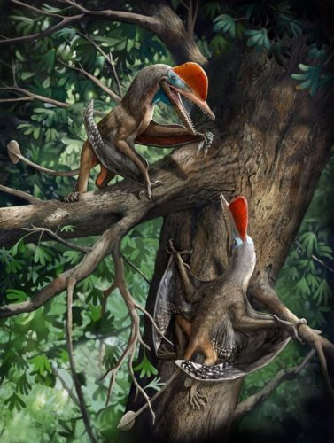 """Ancient """"Monkeydactyl"""" dinosaur bears the oldest known opposed thumbs"""