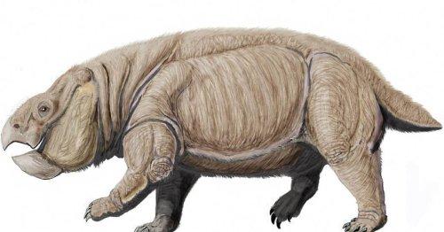 Ancient elephant-sized mammal ancestor gave dinosaurs a run for their money