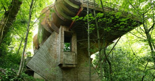 Oregon man thrashes local children in treehouse-building contest