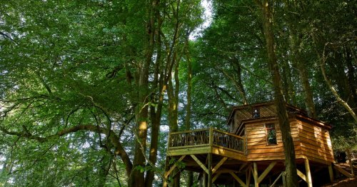 Handcrafted treehouse lures adventurers into the canopy on UK heritage coast