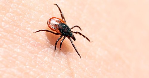Existing antibiotic found to take out the root cause of Lyme disease