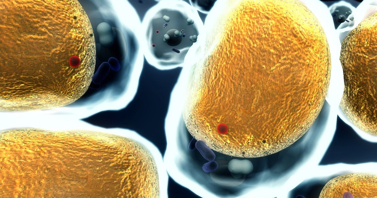 Heart disease drug reverses obesity by targeting inflammation