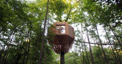 Geometric treehouse packs unexpected treetop luxury