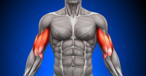 Protein discovery promises powerful new muscle regrowth treatments