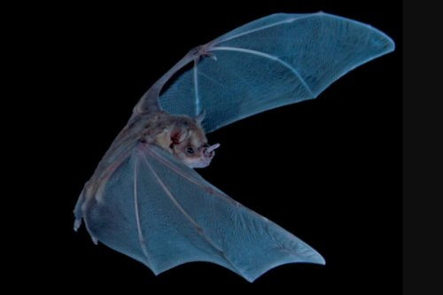 Scientists tunnel back over 4,000 years in time – through bat guano