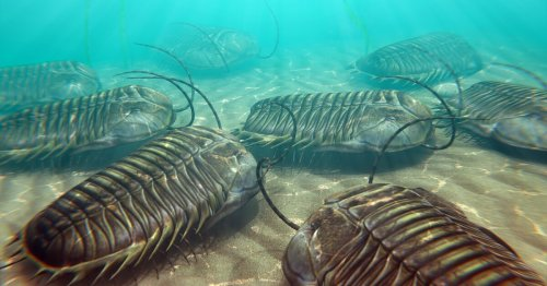 """""""Fool's gold"""" fossils reveal trilobites breathed through their legs"""