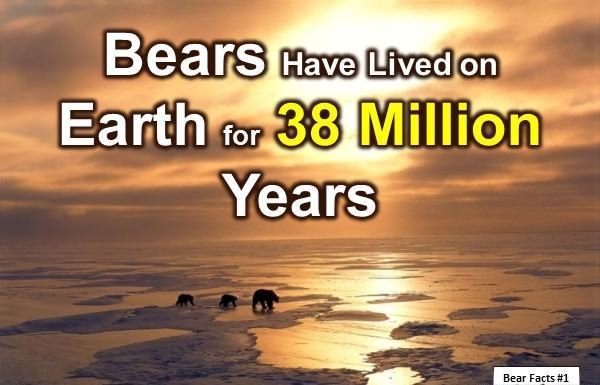 10 Interesting Facts about Bears You Might Not Know