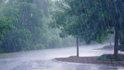 Biowetter in Mannheim heute: Wetterfühlig? Diese Beschwerden erwarten Sie aktuell