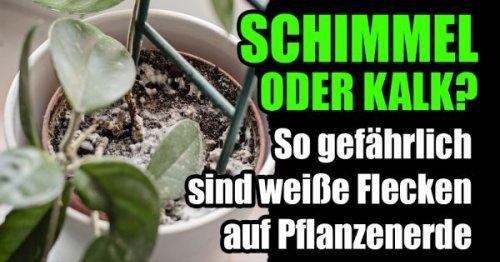 Zimmerpflanzen: So gefährlich sind weiße Flecken auf Pflanzenerde