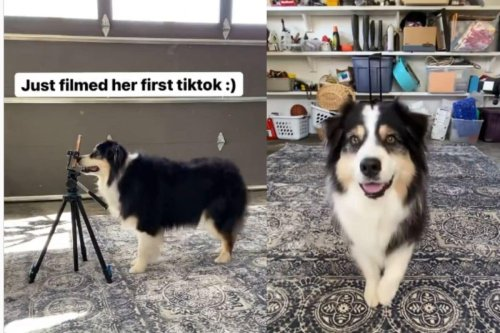 Watch: Dog Makes Her Own TikTok Video with a Nose Boop. Adorable Video Goes Viral