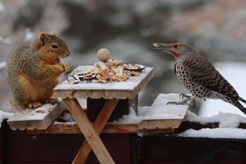 This Adorable Photo of a Squirrel and Bird on a Park Bench is Just too Cute to Handle