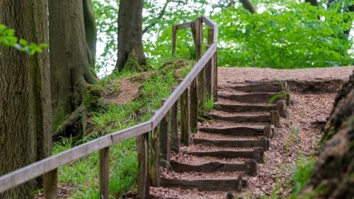 What Are Mysterious Staircases That Appear Deep Inside Forests and Where Do They Lead?
