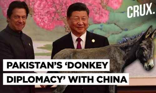 Imran Khan's Pakistan Govt To Export Donkeys To Boost Ties With China Improve Its Economy