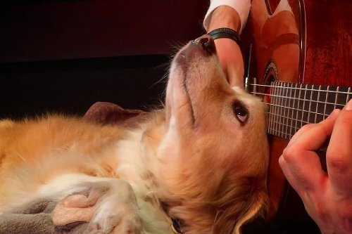 Internet's Beloved Dogstar 'Maple' Who Played Drums No More, YouTuber Shares Heartbreaking Post