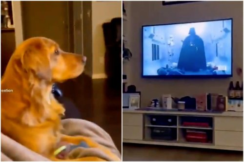 Puppy's Reaction after Watching Darth Vader for First Time Goes Viral, Luke Skywalker Says He Can Relate
