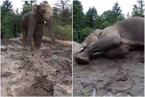 Viral Video of Elephant Enjoying 'Spa Day' is Winning Twitter