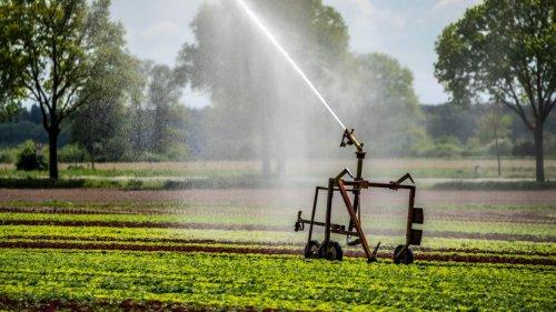 Niedersachsen: Wasser wird immer knapper – düstere Prognose