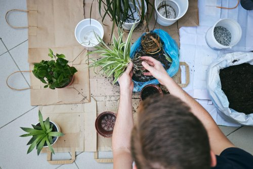 7 tips for refreshing your home in the springtime