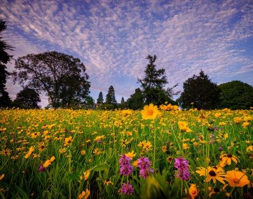 How to rewild your garden with prairie planting