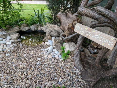 How to build your own wildlife-friendly mini pond