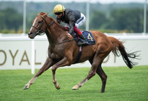 Stradivarius primed in pursuit of fifth Goodwood Cup