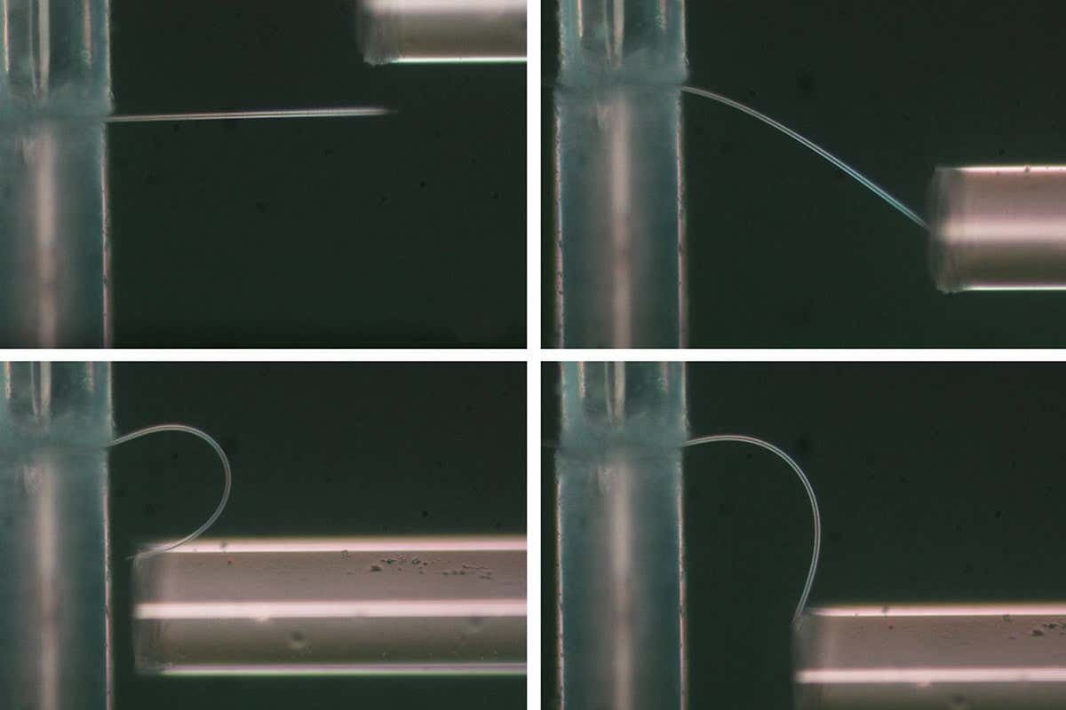 New kind of ice is so bendy it can curl and uncurl without breaking