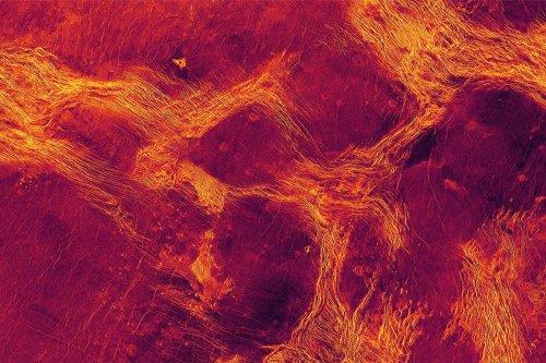 Venus has huge landmasses that jostle about like Earth's continents