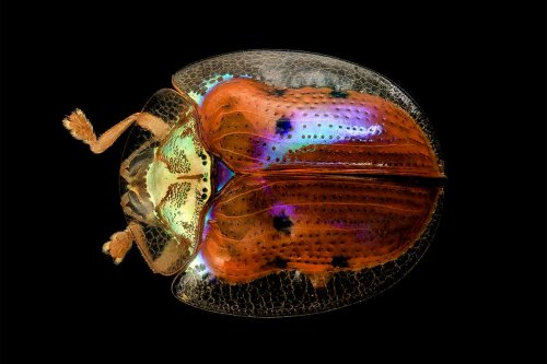Colour-changing beetle inspires algorithm for efficient engineering