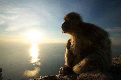 Elderly monkeys choose to have fewer friends – just like us