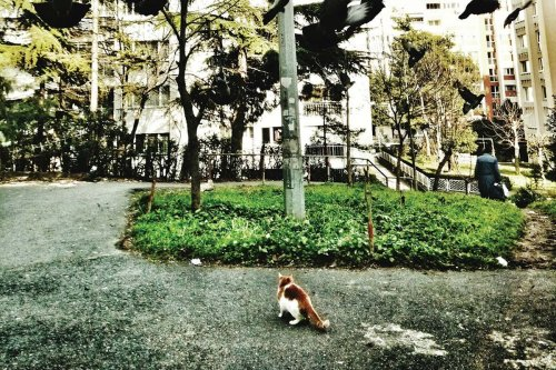 Complex cats: Let's see our feline friends as they really are