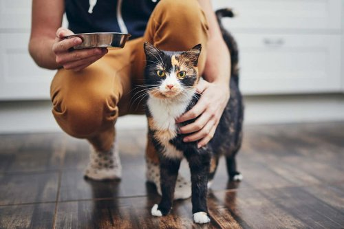 Feeding your cat a very meaty diet may mean it kills less wildlife