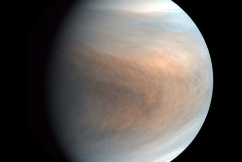 Life in the toxic clouds of Venus