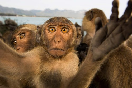 Animal intelligence is so common, we must rethink our view of wildlife
