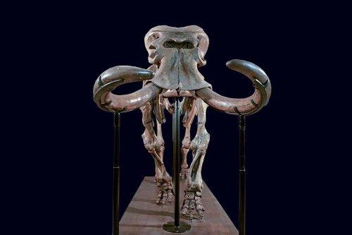 Extinct Sicilian elephant lost 8000 kilograms as it evolved and shrank