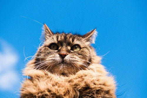 Cats cost Australia A$6 billion a year by spreading diseases