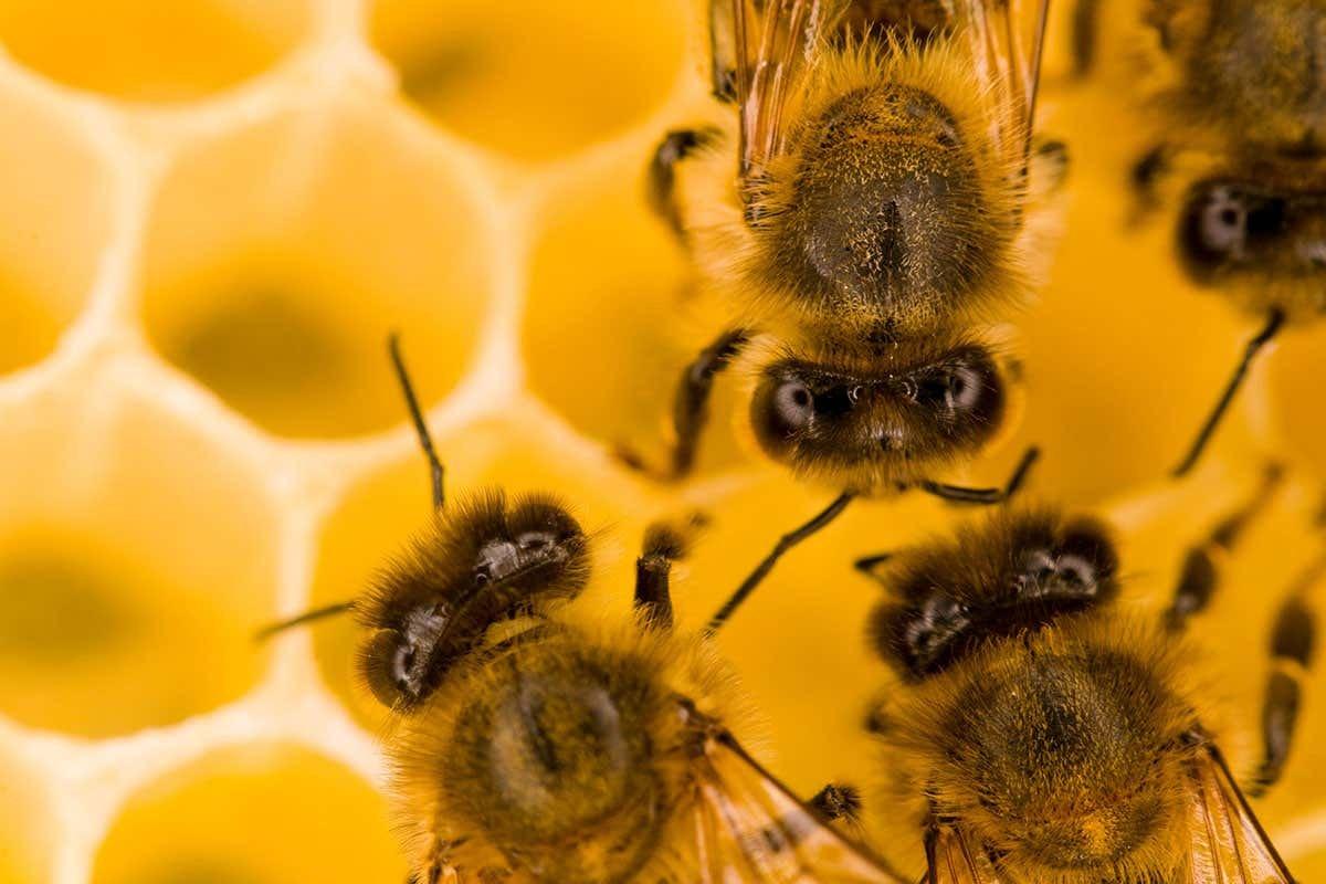Why do bees make honey? - cover