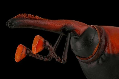 Spectacular red palm weevil scoops top award in bug photography prize